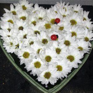 Букет №8 Ромашковое сердце 51 шт.